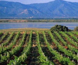 Economy: Plethora of problems are hitting Algerian winemakers hard